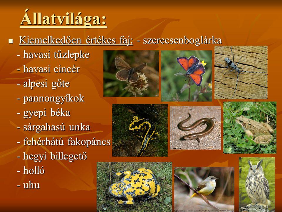 Állatvilága:  Kiemelkedően értékes faj: - szerecsenboglárka - havasi tűzlepke - havasi tűzlepke - havasi cincér - havasi cincér - alpesi gőte - alpes