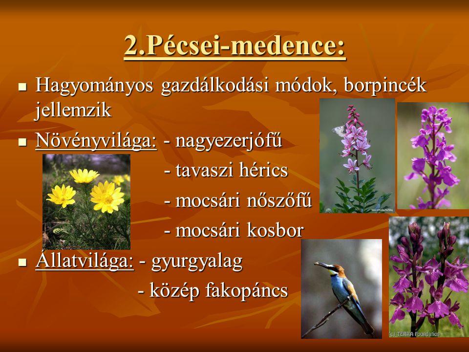 2.Pécsei-medence:  Hagyományos gazdálkodási módok, borpincék jellemzik  Növényvilága: - nagyezerjófű - tavaszi hérics - tavaszi hérics - mocsári nős