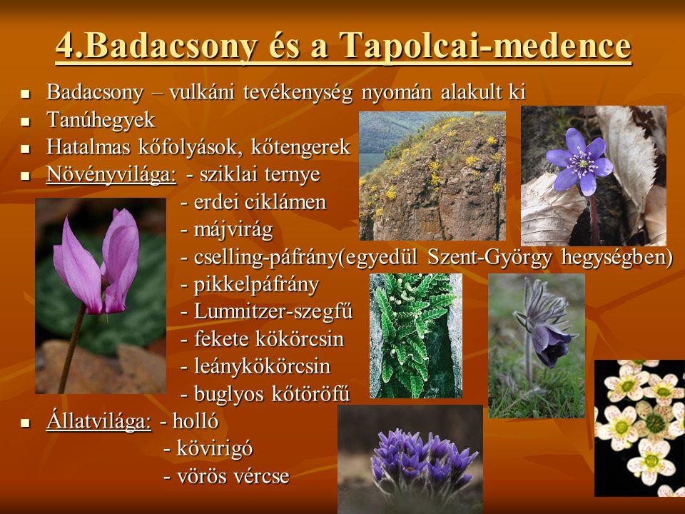 4.Badacsony és a Tapolcai-medence  Badacsony – vulkáni tevékenység nyomán alakult ki  Tanúhegyek  Hatalmas kőfolyások, kőtengerek  Növényvilága: -