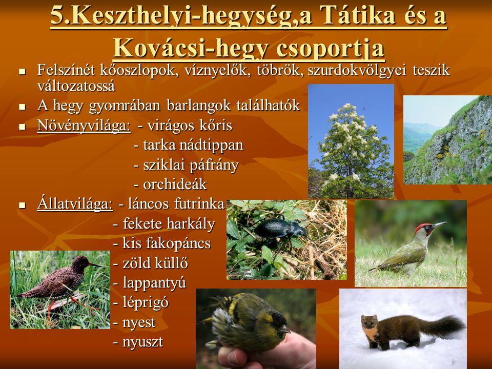 5.Keszthelyi-hegység,a Tátika és a Kovácsi-hegy csoportja  Felszínét kőoszlopok, víznyelők, töbrök, szurdokvölgyei teszik változatossá  A hegy gyomr