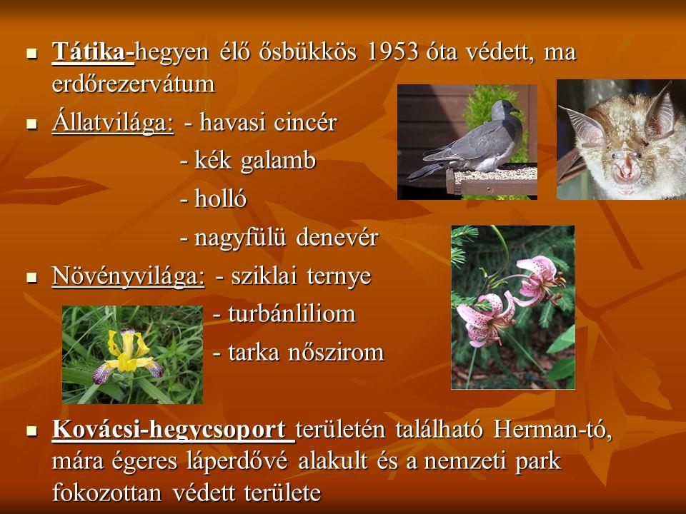  Tátika-hegyen élő ősbükkös 1953 óta védett, ma erdőrezervátum  Állatvilága: - havasi cincér - kék galamb - kék galamb - holló - holló - nagyfülü de