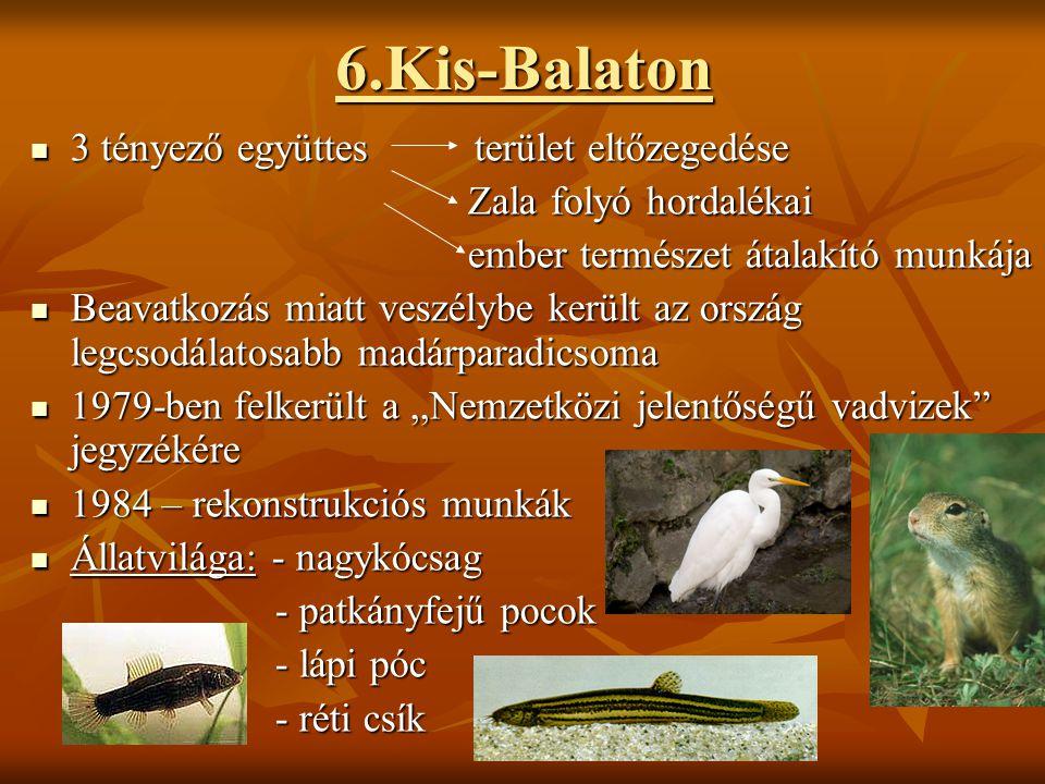 6.Kis-Balaton  3 tényező együttes terület eltőzegedése Zala folyó hordalékai Zala folyó hordalékai ember természet átalakító munkája ember természet