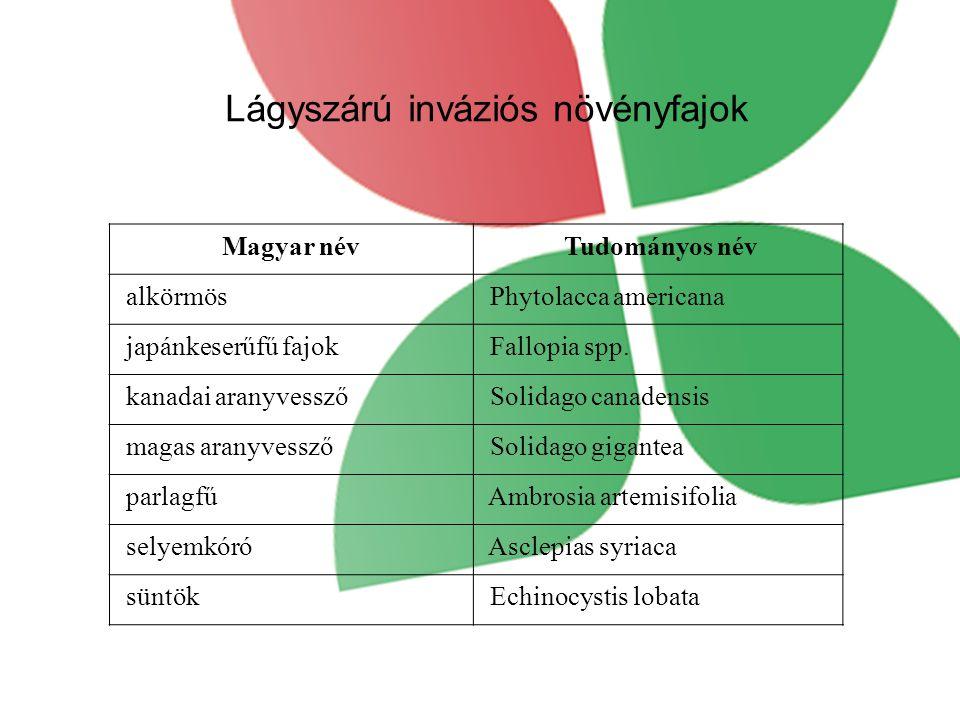 Lágyszárú inváziós növényfajok Magyar név Tudományos név alkörmös Phytolacca americana japánkeserűfű fajok Fallopia spp.