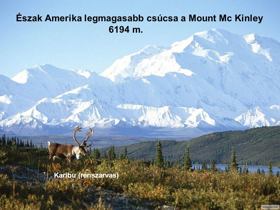 Alaszka 1959 óta az USA 49. tagállama. Területe ~ 1,5millió km² Lakosainak száma 626 ezer fő. Fővárosa: Juneau Az USA 1867 ben vásárolta meg a cári Or