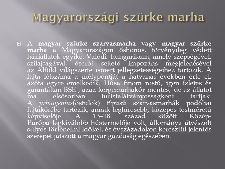  A magyar szürke szarvasmarha vagy magyar szürke marha a Magyarországon őshonos, törvényileg védett háziállatok egyike. Valódi hungarikum, amely szép