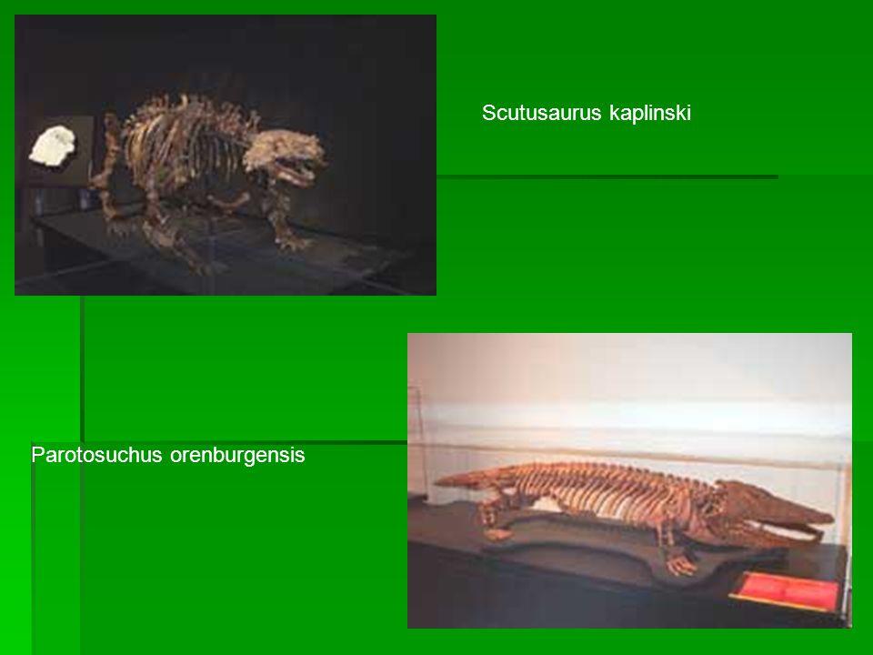 Scutusaurus kaplinski Parotosuchus orenburgensis