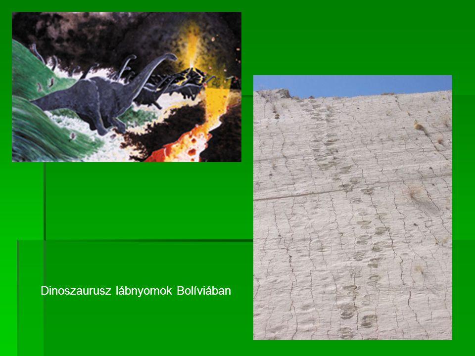 Dinoszaurusz lábnyomok Bolíviában