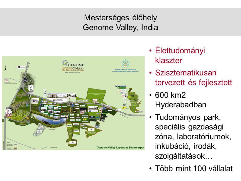 Mesterséges élőhely Genome Valley, India •Élettudományi klaszter •Szisztematikusan tervezett és fejlesztett •600 km2 Hyderabadban •Tudományos park, speciális gazdasági zóna, laboratóriumok, inkubáció, irodák, szolgáltatások… •Több mint 100 vállalat