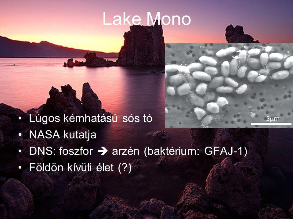 Lake Mono •Lúgos kémhatású sós tó •NASA kutatja •DNS: foszfor  arzén (baktérium: GFAJ-1) •Földön kívüli élet ( )