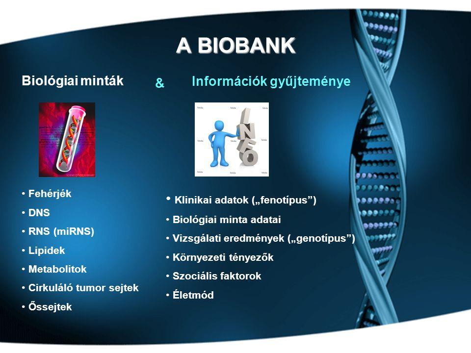 """A BIOBANK Biológiai minták • Fehérjék • DNS • RNS (miRNS) • Lipidek • Metabolitok • Cirkuláló tumor sejtek • Őssejtek Információk gyűjteménye • Klinikai adatok (""""fenotípus ) • Biológiai minta adatai • Vizsgálati eredmények (""""genotípus ) • Környezeti tényezők • Szociális faktorok • Életmód &"""