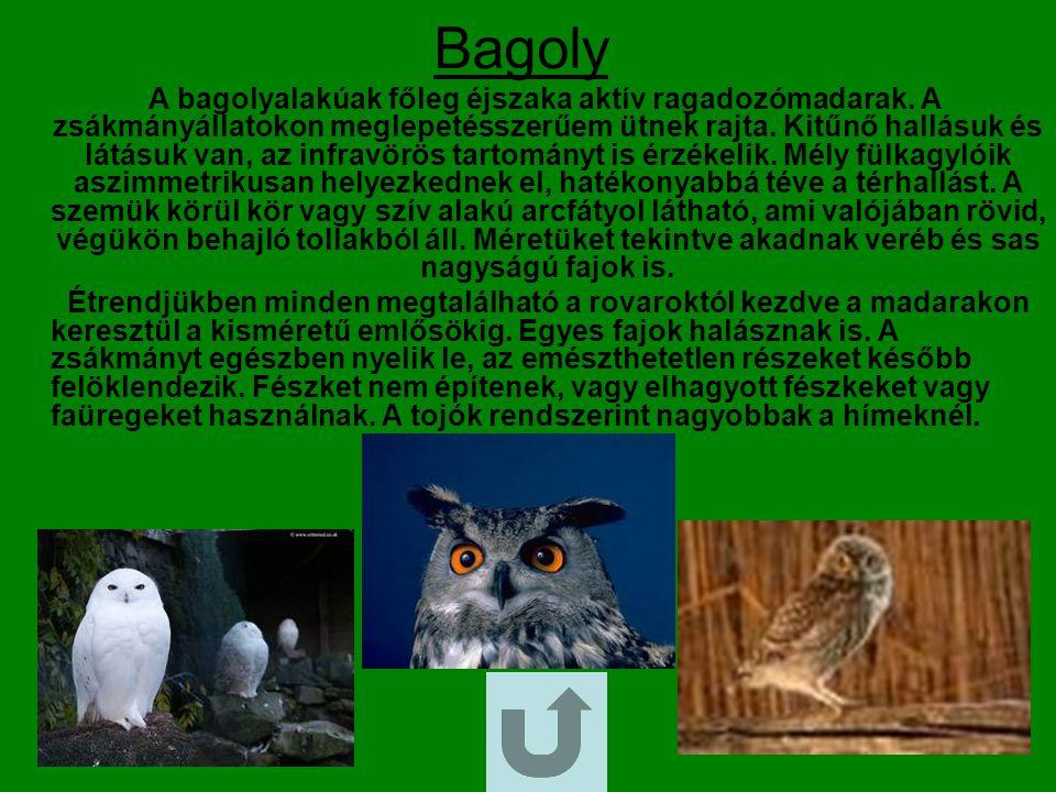 Keselyű A dögkeselyű a sólyomalakúak rendjébe, ezen belül a vágómadárfélék családjába tartozó nem egyetlen faja.