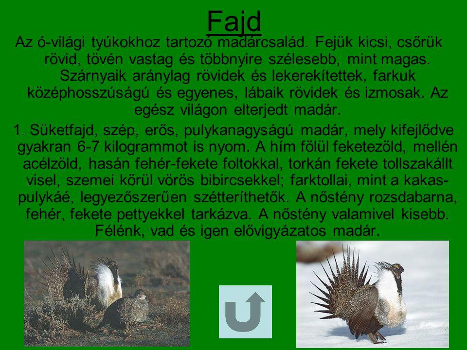 Fogoly Az óvilági tyúkok csoportjába és a mezei tyúkok családjába tartozó madárfaj.