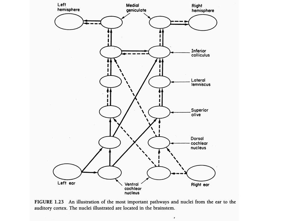 1.A hallàsi rendszer egyszerű: -- nem lineàris (1 dB be 1 dB ki) -- sàvszűrő ~àllandó Q-val .