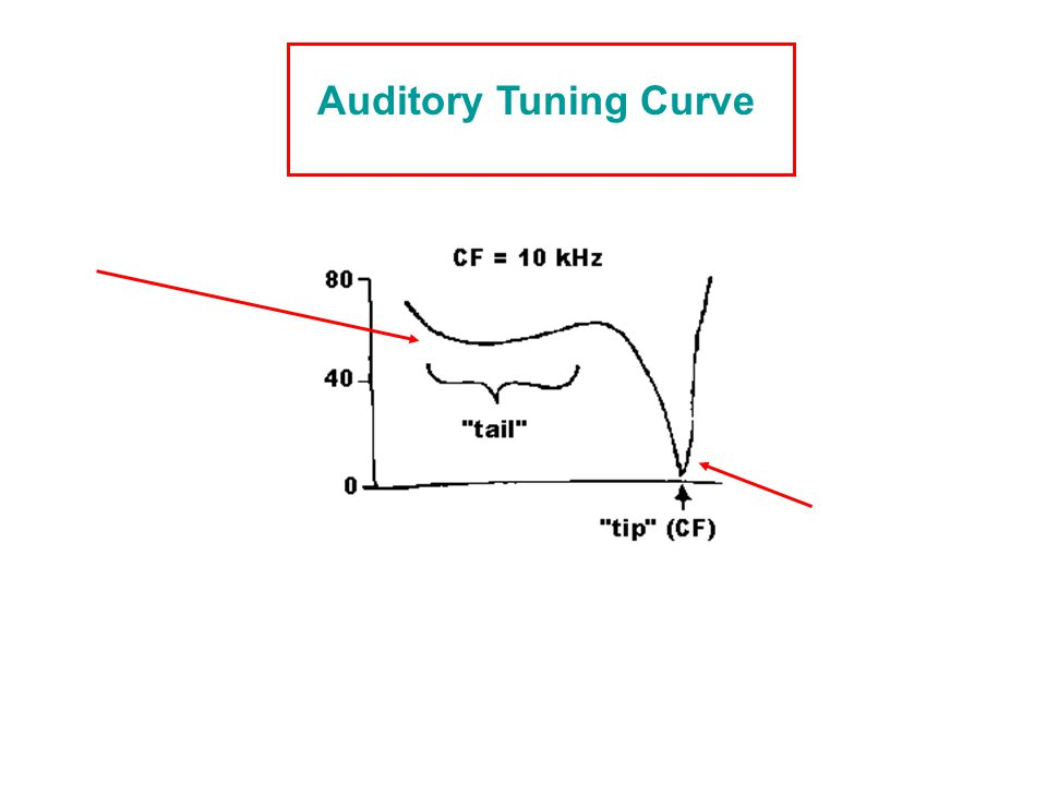 Auditory Tuning Curve