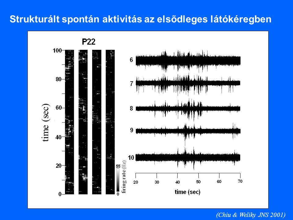 Strukturált spontán aktivitás az elsõdleges látókéregben (Chiu & Weliky JNS 2001) time (sec) firing rate (Hz)