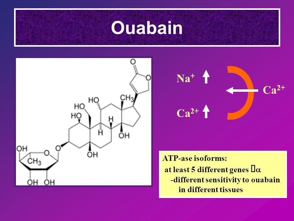 Ouabain Ca 2+ Na + ATP-ase isoforms: at least 5 different genes   -different sensitivity to ouabain in different tissues