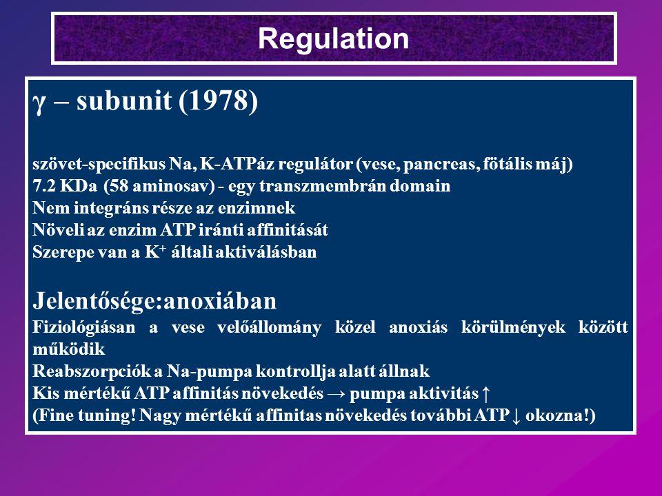 Regulation γ – subunit (1978) szövet-specifikus Na, K-ATPáz regulátor (vese, pancreas, fötális máj) 7.2 KDa (58 aminosav) - egy transzmembrán domain Nem integráns része az enzimnek Növeli az enzim ATP iránti affinitását Szerepe van a K + általi aktiválásban Jelentősége:anoxiában Fiziológiásan a vese velőállomány közel anoxiás körülmények között működik Reabszorpciók a Na-pumpa kontrollja alatt állnak Kis mértékű ATP affinitás növekedés → pumpa aktivitás ↑ (Fine tuning.