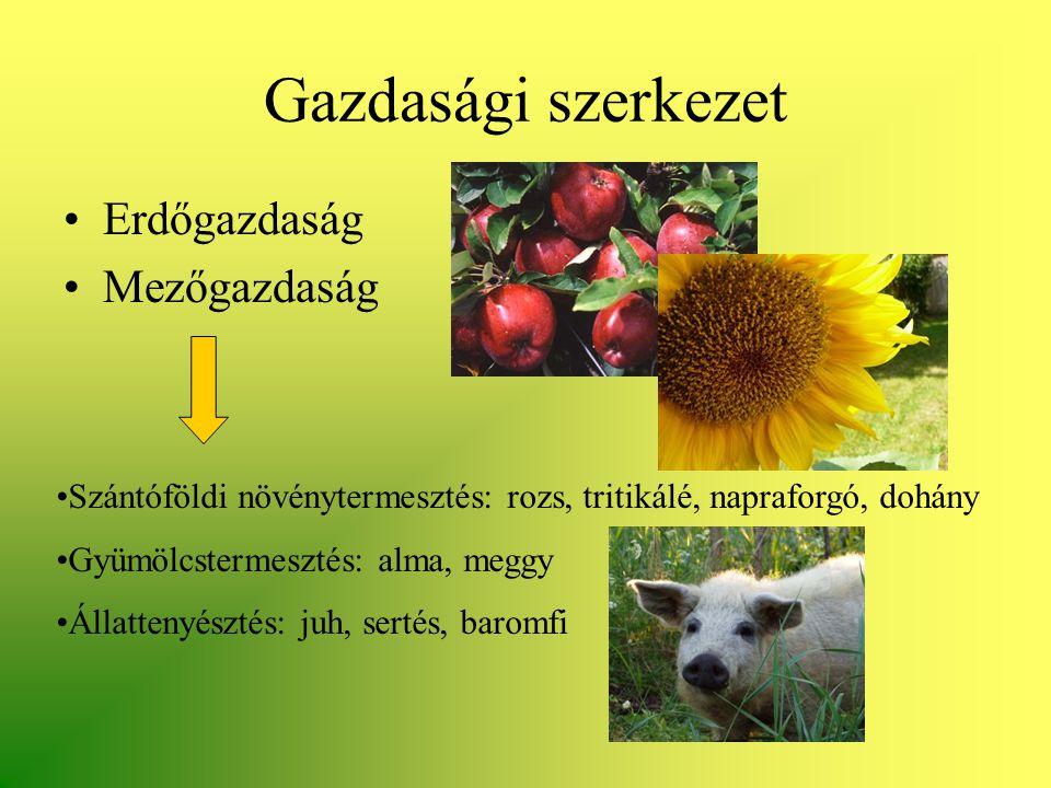 Gazdasági szerkezet •Erdőgazdaság •Mezőgazdaság •Szántóföldi növénytermesztés: rozs, tritikálé, napraforgó, dohány •Gyümölcstermesztés: alma, meggy •Á
