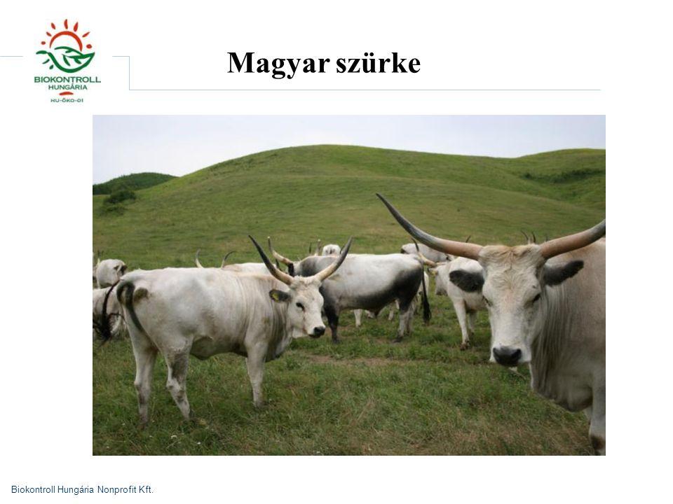 Biokontroll Hungária Nonprofit Kft. Magyar szürke