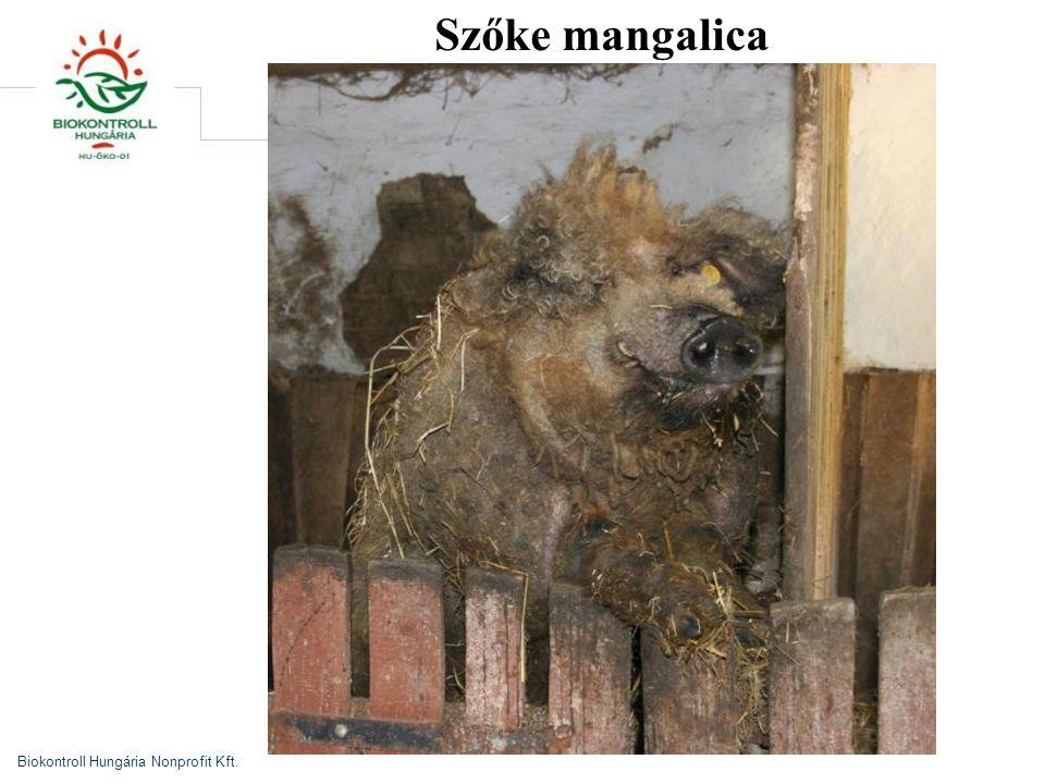 Biokontroll Hungária Nonprofit Kft. Szőke mangalica