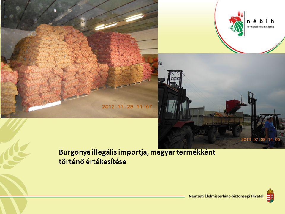 Burgonya illegális importja, magyar termékként történő értékesítése