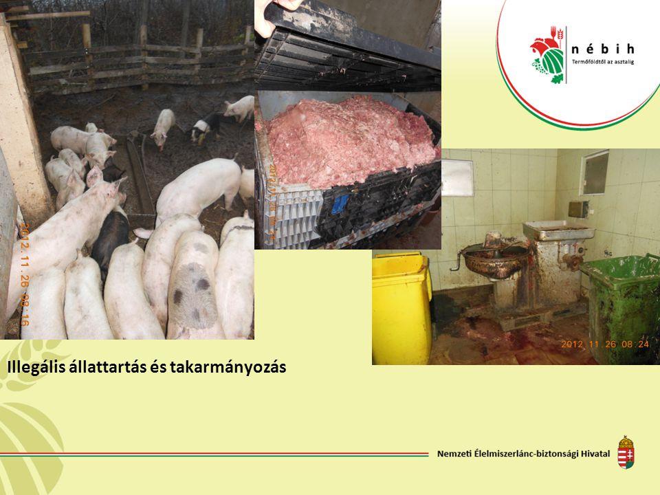 Illegális állattartás és takarmányozás