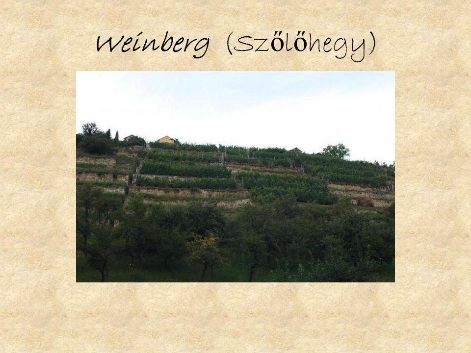 Weinberg (Sz ő l ő hegy)