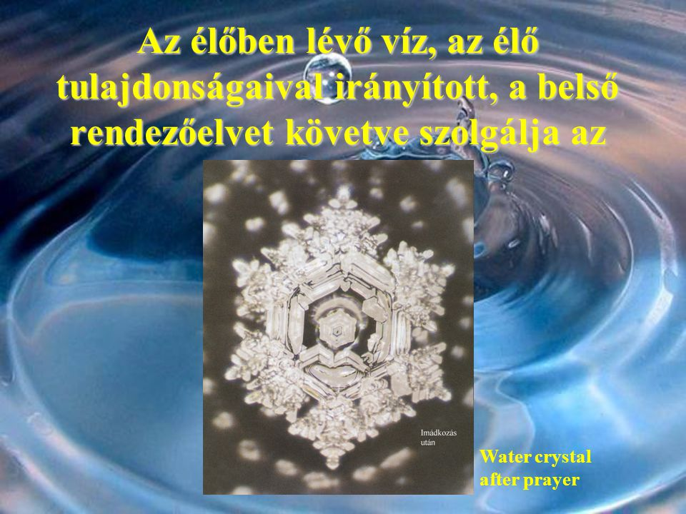Az élőben lévő víz, az élő tulajdonságaival irányított, a belső rendezőelvet követve szolgálja az életet. Water crystal after prayer