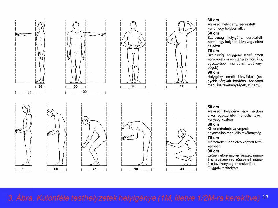 14 Az emberi testméretekkel, mozgásokkal összefüggő térigények  A lakásokban folyó tevékenységekhez szükséges terek, térrészek méretei a használó sze