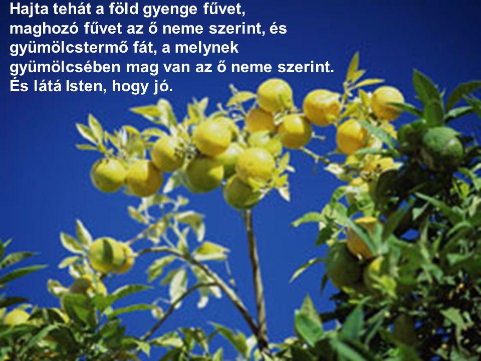 Hajta tehát a föld gyenge fűvet, maghozó fűvet az ő neme szerint, és gyümölcstermő fát, a melynek gyümölcsében mag van az ő neme szerint. És látá Iste