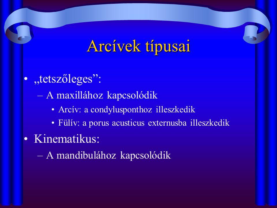 """Arcívek típusai •""""tetszőleges"""": –A maxillához kapcsolódik •Arcív: a condylusponthoz illeszkedik •Fülív: a porus acusticus externusba illeszkedik •Kine"""