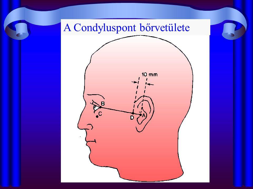 A Condyluspont bőrvetülete