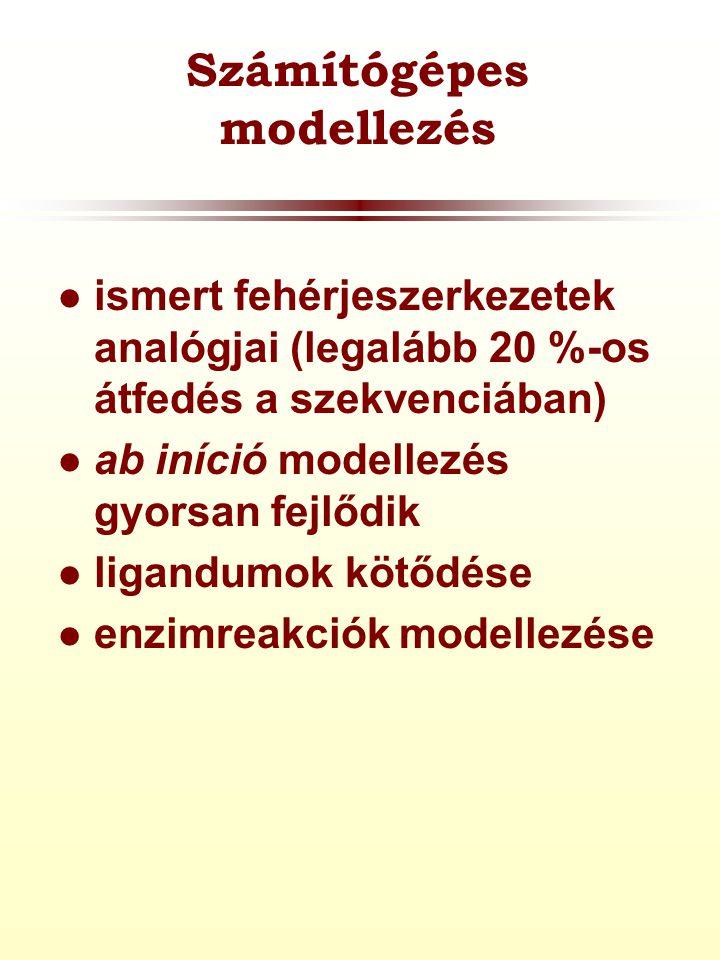 Számítógépes modellezés  ismert fehérjeszerkezetek analógjai (legalább 20 %-os átfedés a szekvenciában)  ab iníció modellezés gyorsan fejlődik  ligandumok kötődése  enzimreakciók modellezése