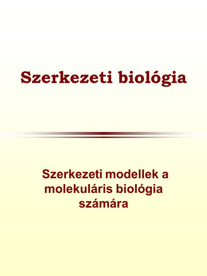 Szerkezeti biológia  Szerkezeti modellek a molekuláris biológia számára