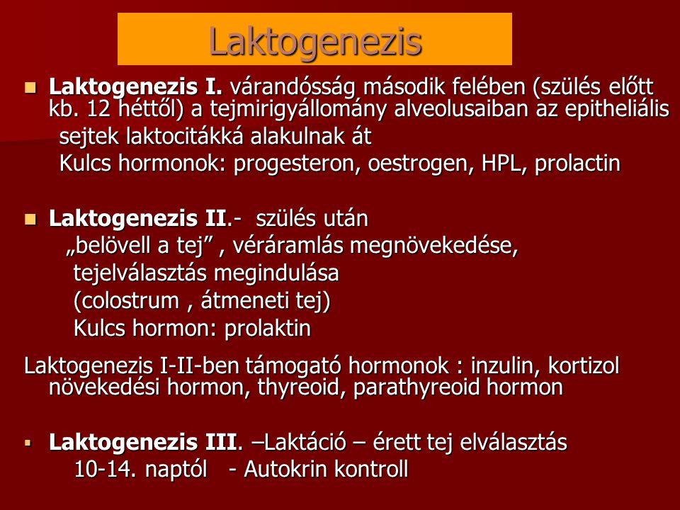 Laktogenezis  Laktogenezis I. várandósság második felében (szülés előtt kb. 12 héttől) a tejmirigyállomány alveolusaiban az epitheliális sejtek lakto