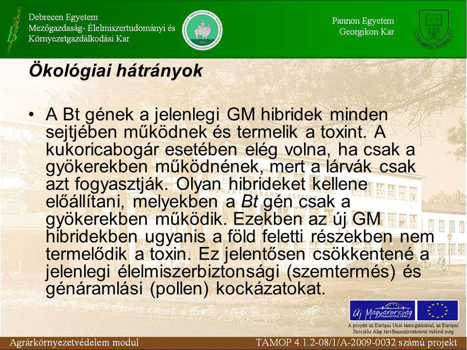 Ökológiai hátrányok •A Bt gének a jelenlegi GM hibridek minden sejtjében működnek és termelik a toxint.