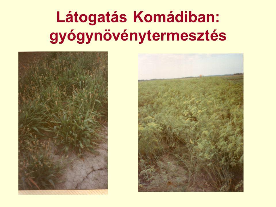 Látogatás Komádiban: gyógynövénytermesztés »