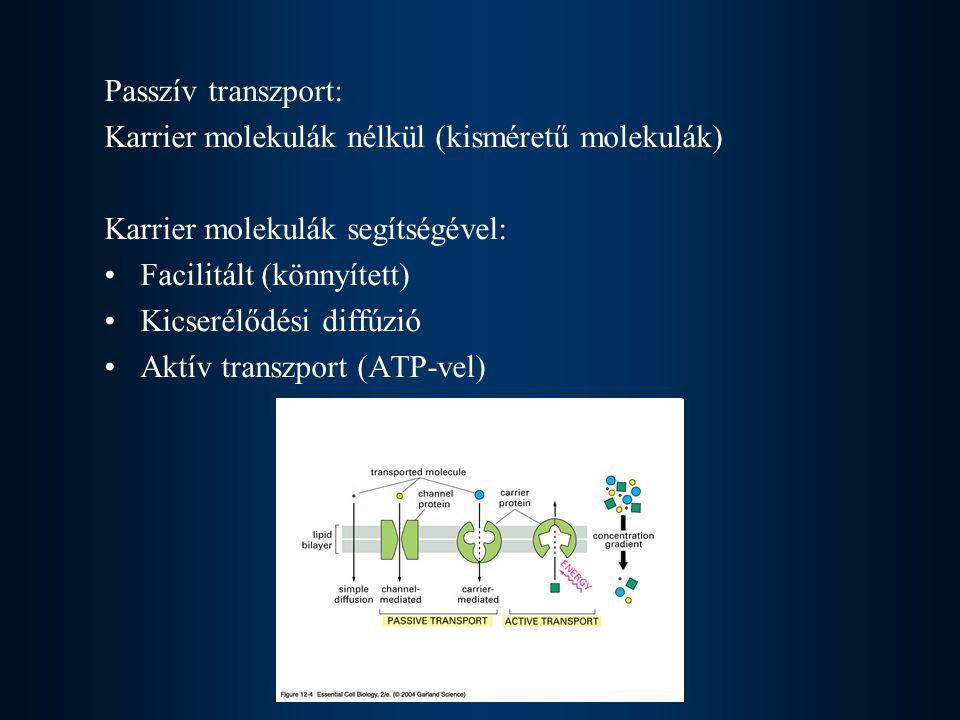 Passzív transzport: Karrier molekulák nélkül (kisméretű molekulák) Karrier molekulák segítségével: •Facilitált (könnyített) •Kicserélődési diffúzió •A