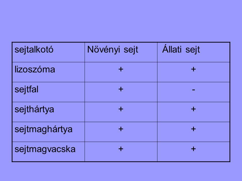 sejtalkotóNövényi sejt Állati sejt lizoszóma++ sejtfal+- sejthártya++ sejtmaghártya++ sejtmagvacska++