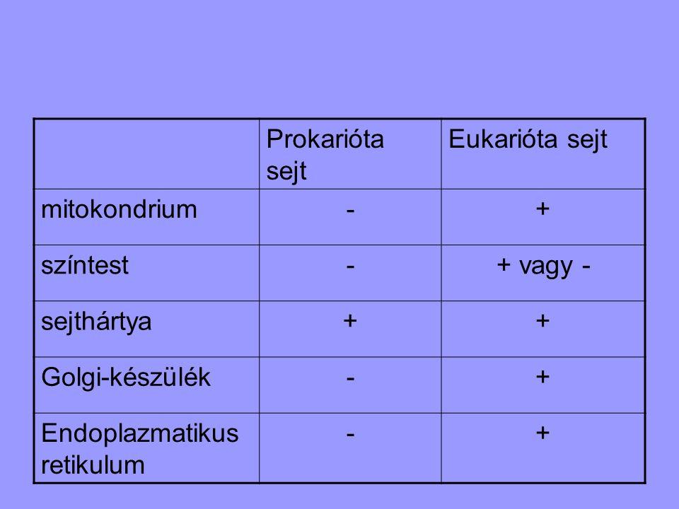 Prokarióta sejt Eukarióta sejt mitokondrium-+ színtest-+ vagy - sejthártya++ Golgi-készülék-+ Endoplazmatikus retikulum -+