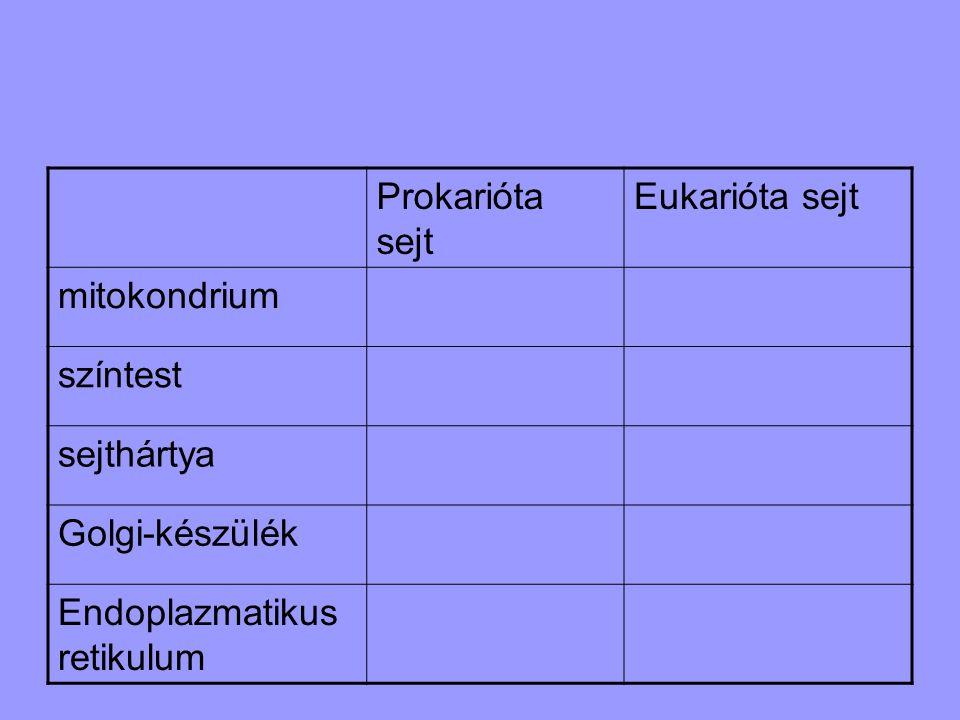 Prokarióta sejt Eukarióta sejt mitokondrium színtest sejthártya Golgi-készülék Endoplazmatikus retikulum