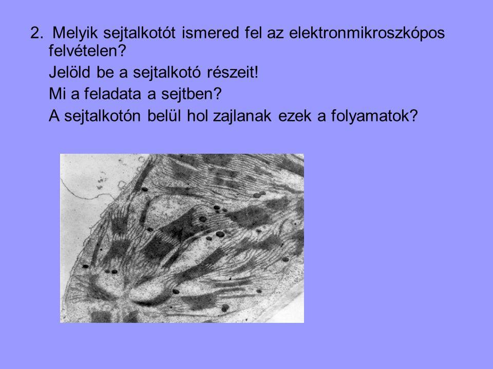 2. Melyik sejtalkotót ismered fel az elektronmikroszkópos felvételen? Jelöld be a sejtalkotó részeit! Mi a feladata a sejtben? A sejtalkotón belül hol