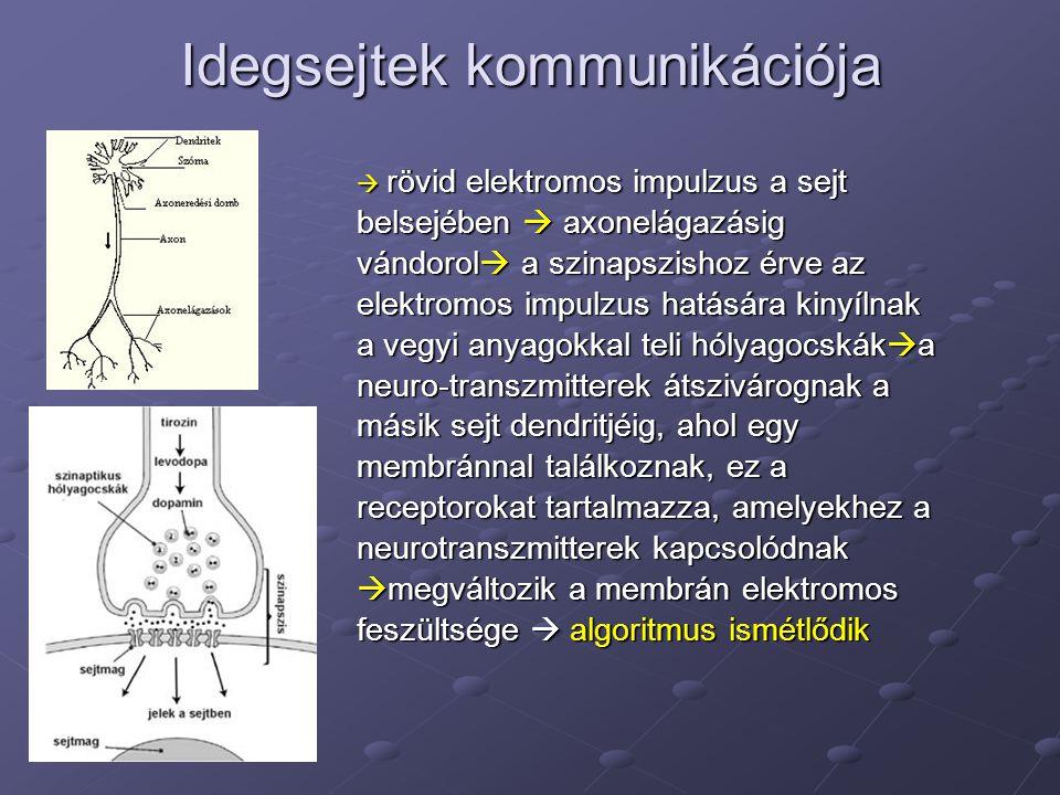  rövid elektromos impulzus a sejt belsejében  axonelágazásig vándorol  a szinapszishoz érve az elektromos impulzus hatására kinyílnak a vegyi anyag