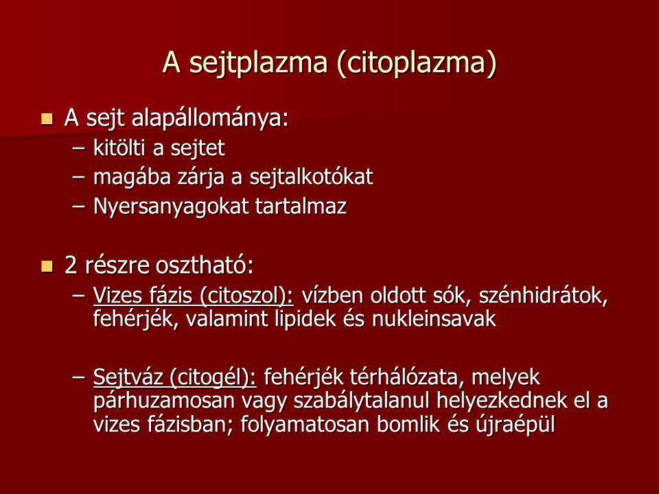 A sejtplazma (citoplazma)  A sejt alapállománya: –kitölti a sejtet –magába zárja a sejtalkotókat –Nyersanyagokat tartalmaz  2 részre osztható: –Vize