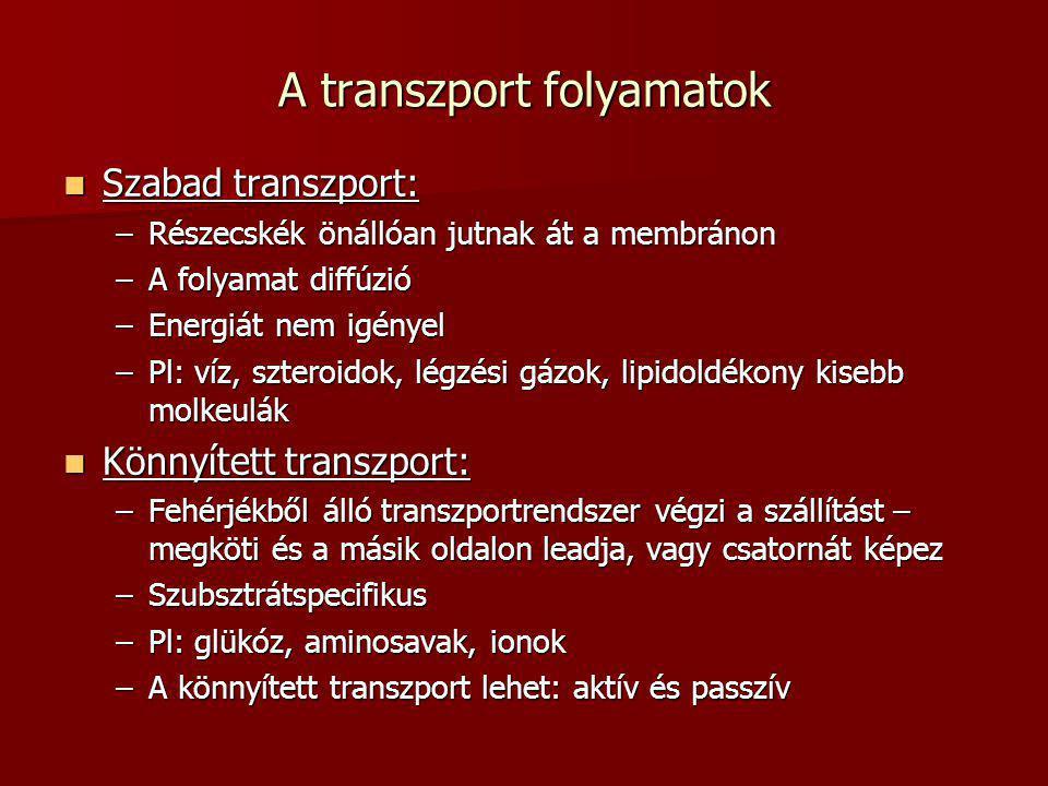 A transzport folyamatok  Szabad transzport: –Részecskék önállóan jutnak át a membránon –A folyamat diffúzió –Energiát nem igényel –Pl: víz, szteroido