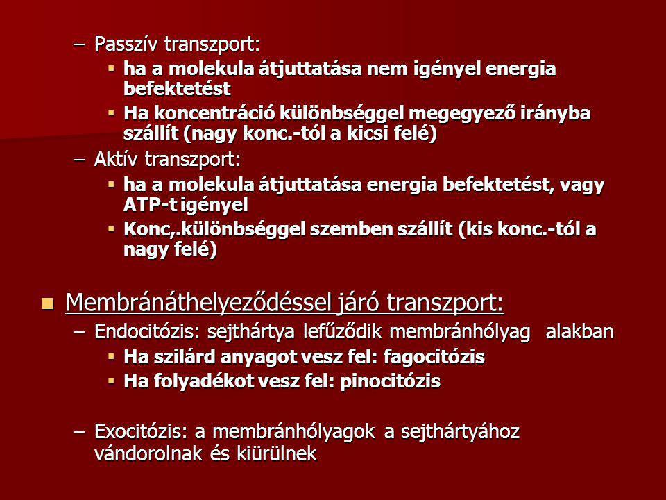 –Passzív transzport:  ha a molekula átjuttatása nem igényel energia befektetést  Ha koncentráció különbséggel megegyező irányba szállít (nagy konc.-