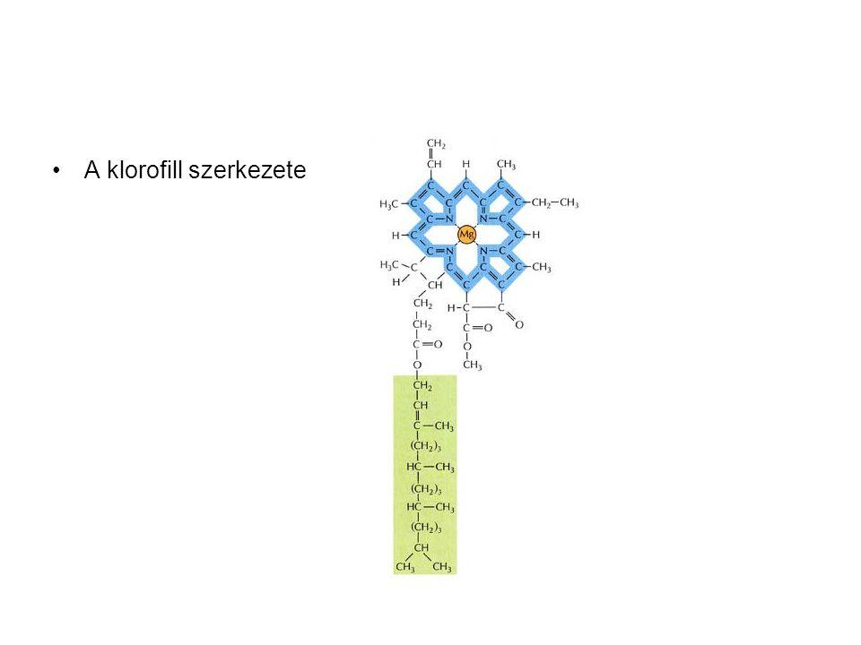 •A klorofill szerkezete