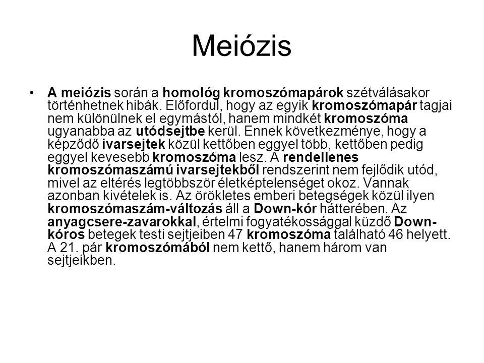 Meiózis •A meiózis során a homológ kromoszómapárok szétválásakor történhetnek hibák. Előfordul, hogy az egyik kromoszómapár tagjai nem különülnek el e
