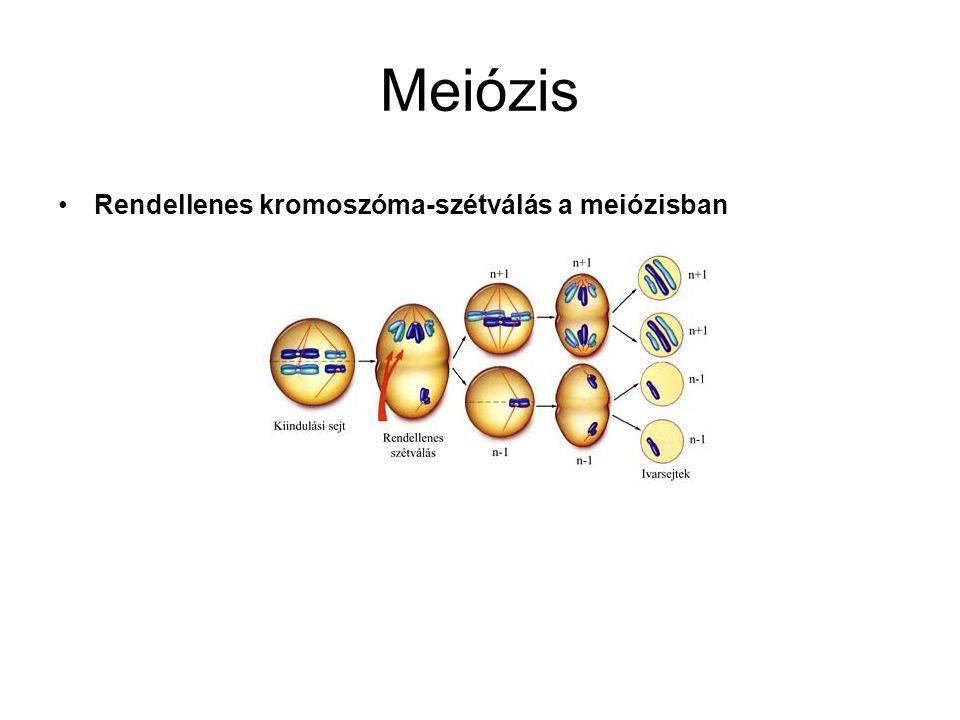 Meiózis •Rendellenes kromoszóma-szétválás a meiózisban