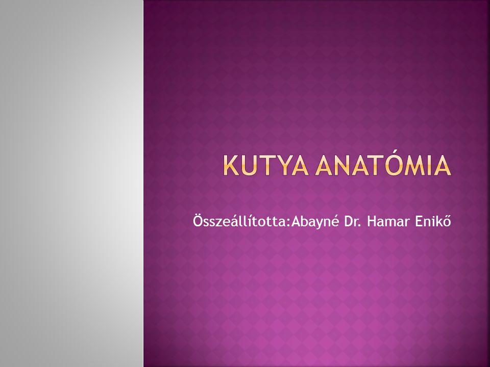 Összeállította:Abayné Dr. Hamar Enikő